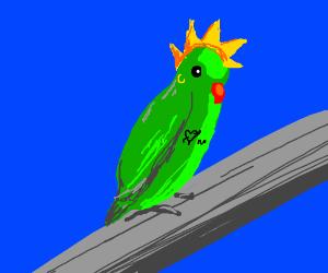 Punk Parakeet
