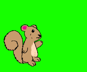 Squirrel in front of a green-screen