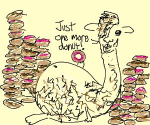 Lama ate too many donuts