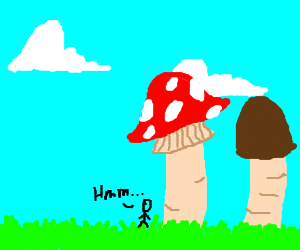 Evaluating two very large mushrooms