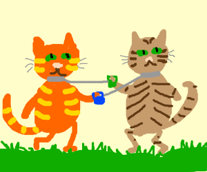 two cats walking each other