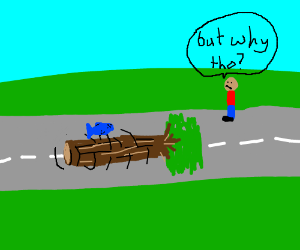 Why did the dead fish and tree cross the road?