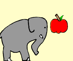 ELEPHANT STARES INTENSELY AT APPLE!!!!!!!!!!!!