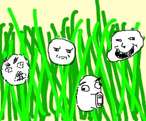 field of memes
