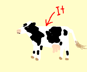 It's the cow