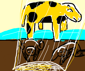 Black and yellow cow is revered as a deity