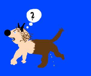 Confused dog-man