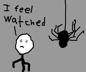 A spider is stalking me