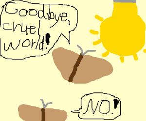 Moth suicide.