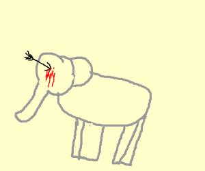 elephant's eyes bleeding, BOO!