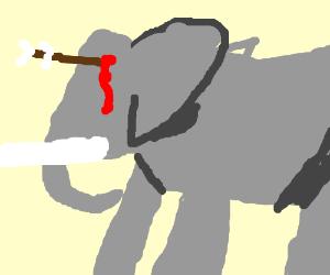 Elephant with arrow in the eye