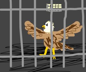 bald eagle in jail