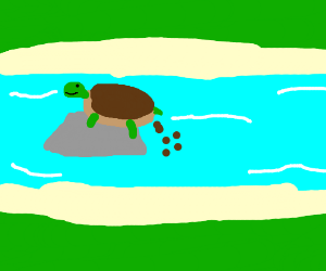 Turtle shits on a rock into the river