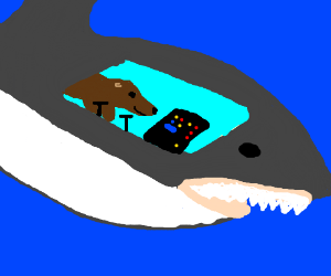 shark controls intuitive enough for seal
