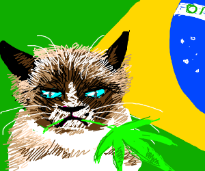 Cat holding weed in front of flag of Brazil