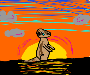 sad meerkat in front of a sunset
