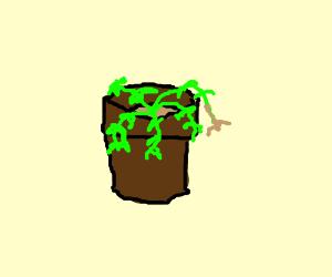 A scraggly houseplant