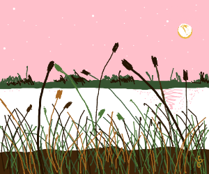 I didn't know the marshes could be this beauti