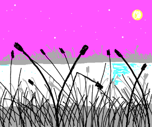 Cattails by the pond