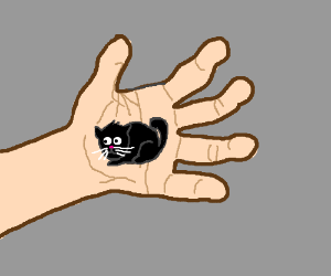 Tiny cat in the palm of my hand