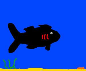 balck fish