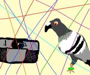 Pigeon at a rave