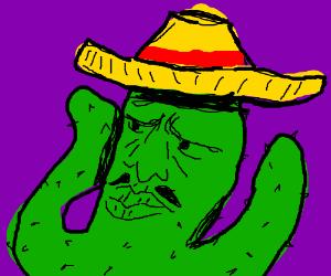 cactus wears a sombrero