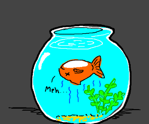 the end of an average life of a pet goldfish