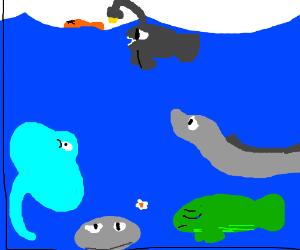Dead fish in aquarium :(