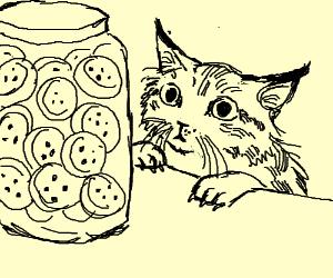 Detailed cat wants cookies