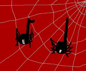Spider notes