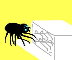 A giant black spider attacks my dishwasher