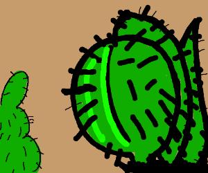 Juan Cacti