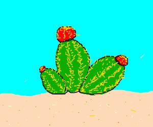 Giant bulbous cactus