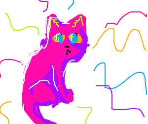 mystic purple-pink cat