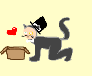 exquisite and classy catman loves a box