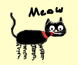 A black cat with springs for feet!