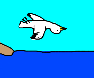 seagull flying upsidedown