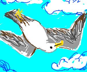 seagull flies upside down