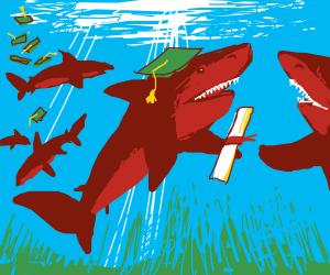 shark graduates