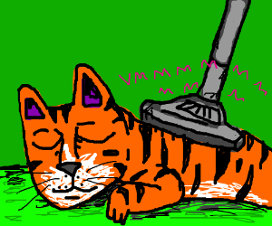 Vacuum cleaning the tiger's fur