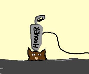 cat vacuum