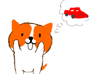 The dog wants a car