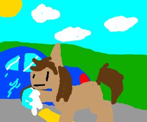 Horse washes car windows