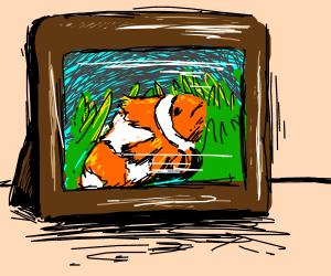 Clown fish was framed!