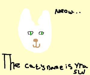 A cat called Yrasw (it's white!)