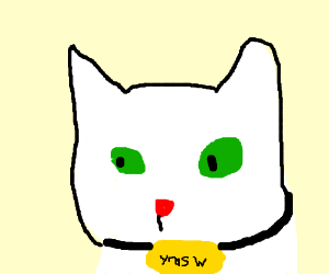 a white cat named yrasw