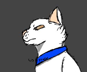 A white cat name yrasw.