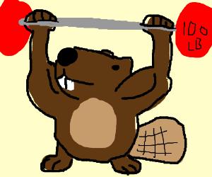 Image result for buff beaver