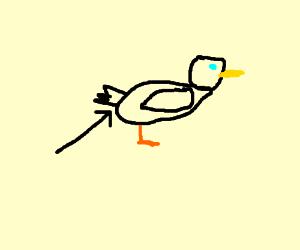 Duck anus